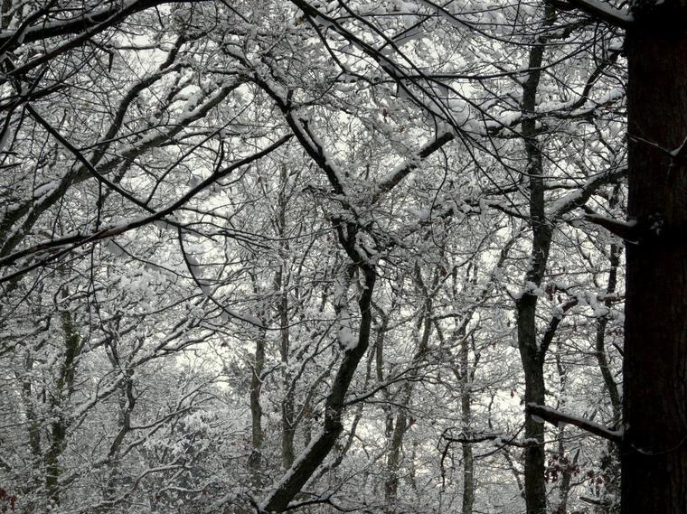 Photos de saison