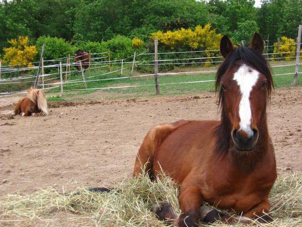 Des poneys parfait sa existe ? -La réponse est oui,en voila la preuve!