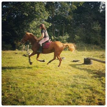 « L'équitation est le seul sport individuel qui se pratique à deux. »