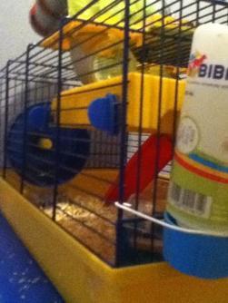 leurs cage