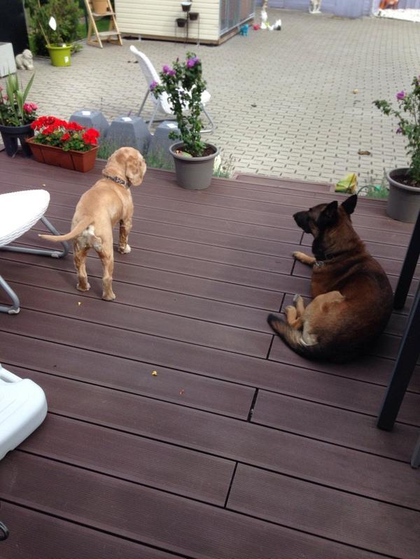 Karbonn et Cash sur la terrasse