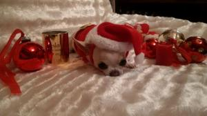 21e Corrida de Noel à Illkirch: Petit papa baston