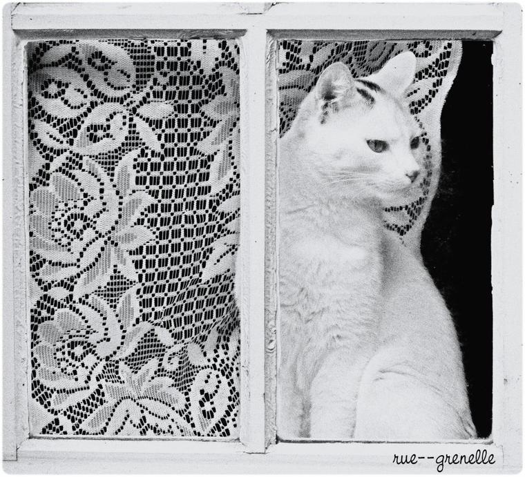 le chat de Salers (15)