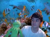 One Direction : Liam Payne s'éclate sur Twitter   + Ils adoptent des chiens aux États-Unis