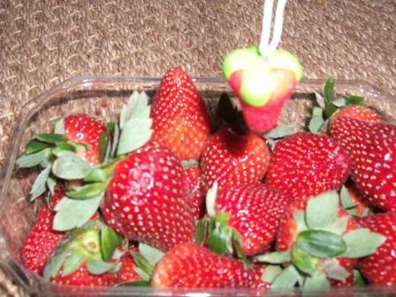 Mmmmh... Une fraise enrobée de chocolat !