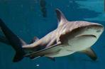 les requins les plupopulaire