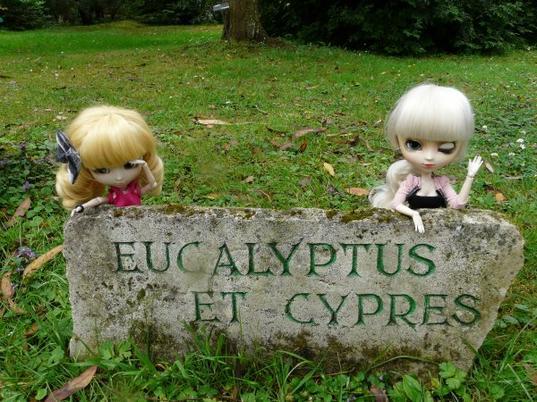 quelques photos de Kyumie et une de ses amies: