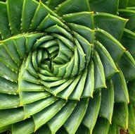 Comment les plantes résistent-elles à la sécheresse?