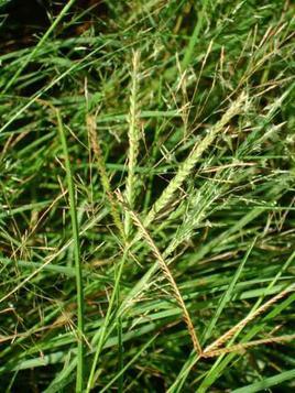 Plante 3 : Tsimpinpingny