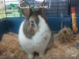 Caramel (L)