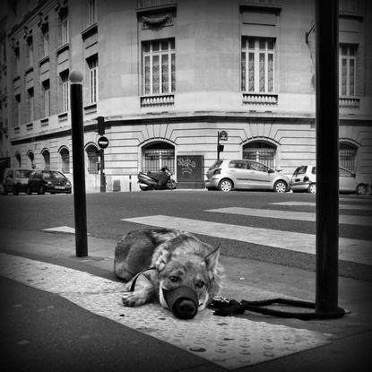 Journal d'un chien
