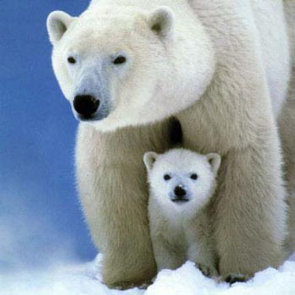 animal du mois de Janvier: L'ours