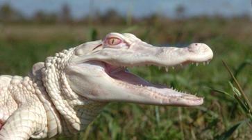Qu'est ce que l'albinisme/ un albinos