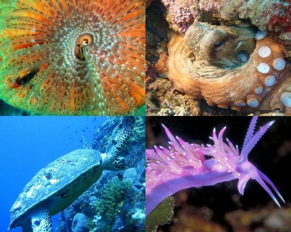 Quand la vie marine dévoile ses merveilles à vos objectifs