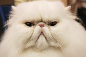 About cats'expressions