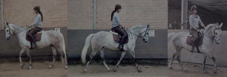 """"""" Quand on monte à cheval, nous sommes entre ciel et terre à une hauteur qui n'existe pas. """""""