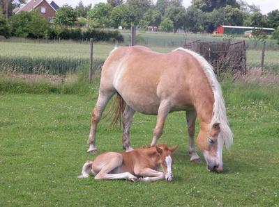Article 1 : Il n'y a pas de secrets intimes entre un cavalier et son cheval ...
