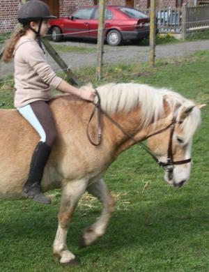 Article 9 : Pour connaître un cheval, il faut apprendre à le comprendre.