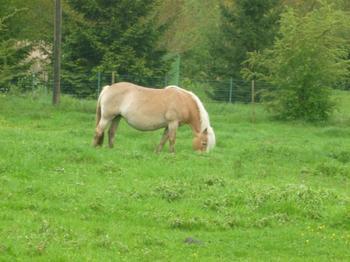 Article 35 : Pourtant on ne s'ennuie jamais car l'ennui vient quand on ne se regarde plus. Et on ne peut pas ne pas regarder un cheval, regarder l'autre. Regardez le vraiment et jamais vous ne vous ennuierez. C'est ça le sentiment équestre et ce n'est rien d'autre que de l'amour.