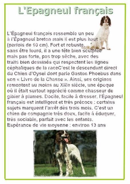 Article sur les cousins de l'épagneul breton