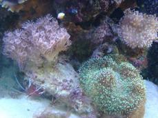 Mon Aquarium eau de mer de 250 litres :