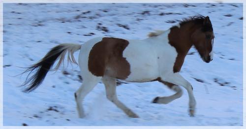 """""""Si le cheval connaissait sa force, serait-il assez fou pour accepter le joug, comme il le fait? Mais qu'il devienne sensé et s'échappe, alors on dira qu'il est fou.."""" August Srindberg."""