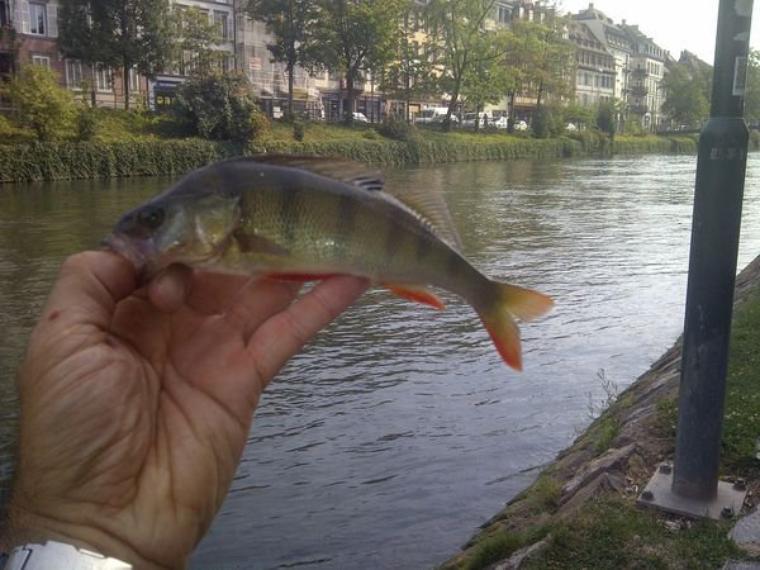 Street fishing à Strasbourg