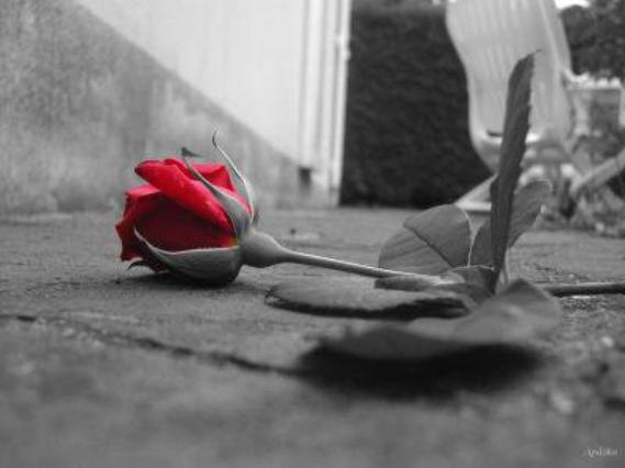 ~..L'amour me rendra forte.. ~