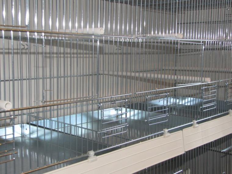 Mes nouvelles cages 31 octobre 2014