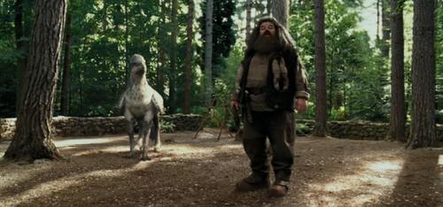 Rubeus Hagrid / Robbie Coltrane