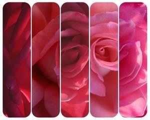 ... ... ... « Guns 'n' Roses » ... ... ...
