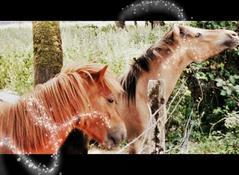 ~Quand la magie de l'équitation nous emporte~