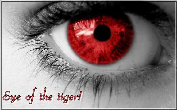 Chapitre 5 : Eye of the Tiger!