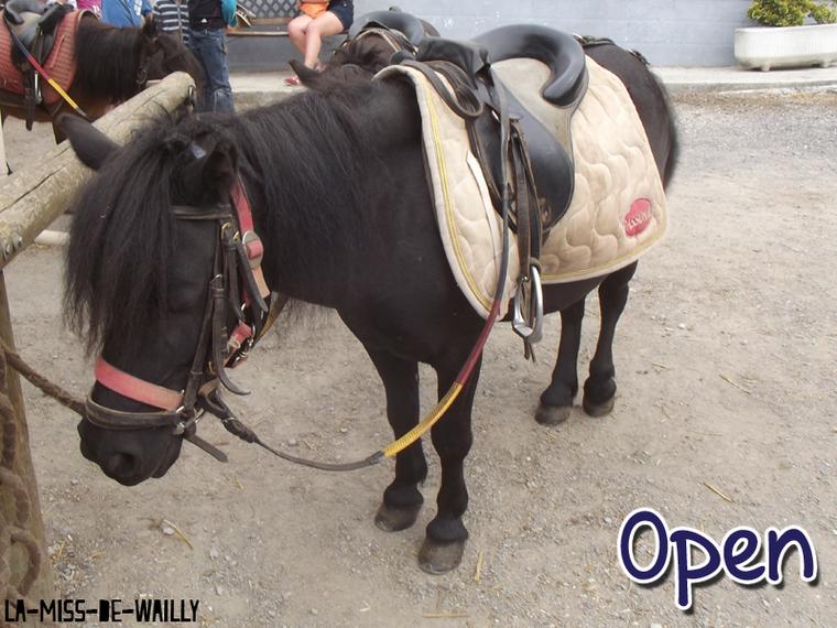 ✿ Open & Opium ❀