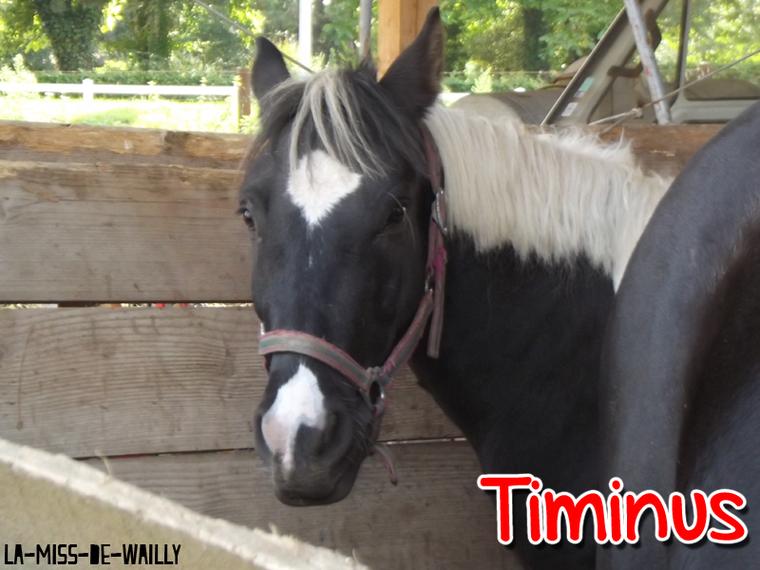 Timinus