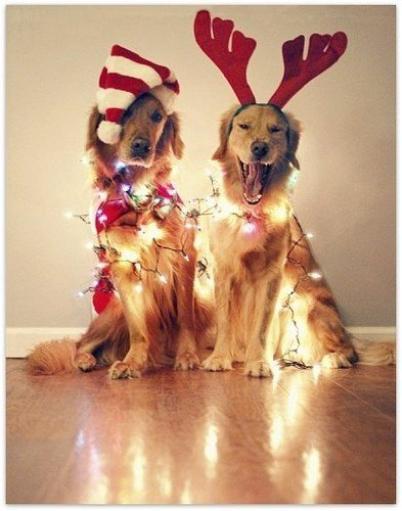 """""""D'un point de vue purement commercial, si Noël n'existait pas il faudrait l'inventer."""" ♦ Katharine Whitehorn"""
