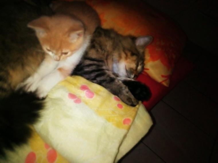 ? Mes deux bébés ? Loulou et Spiky  .