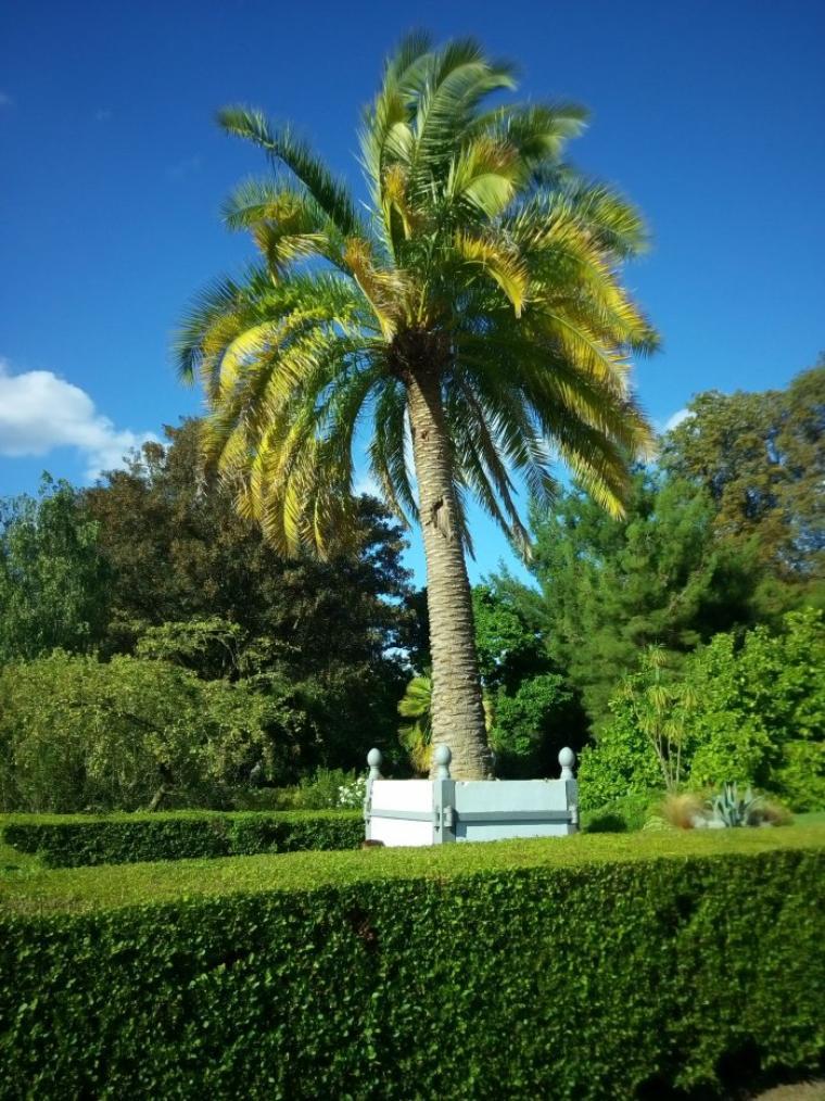 Un beau p'tit palmier 🌴