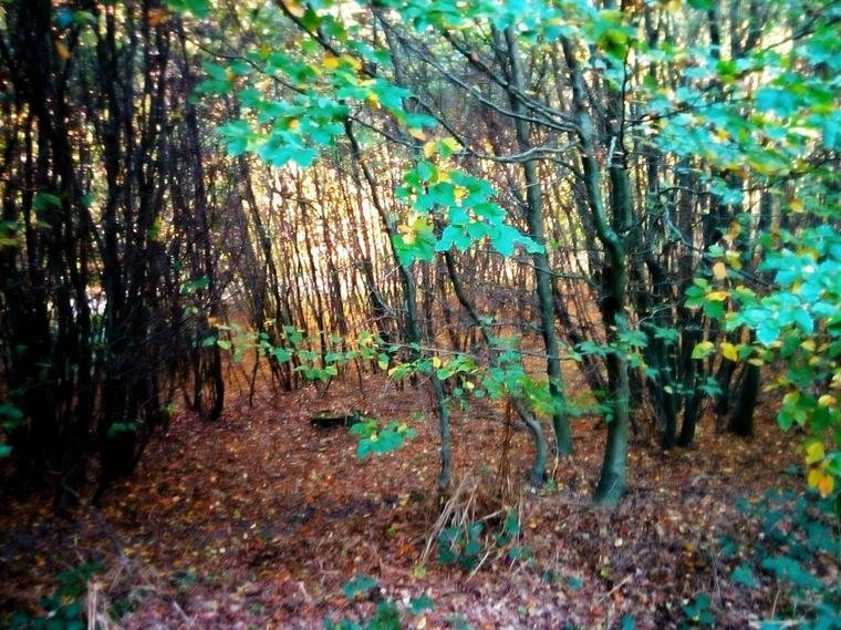 Forêt de Canteleu, Rouen