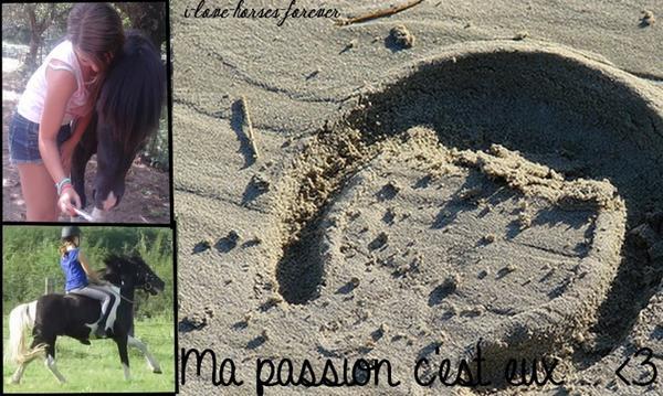HEY bienvenue sur : LA PASSION DE L'EQUITATION  ♥