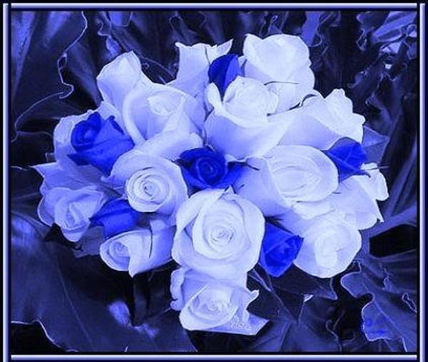 une fleur un papillon         une rose                       pour vous dire bonjour