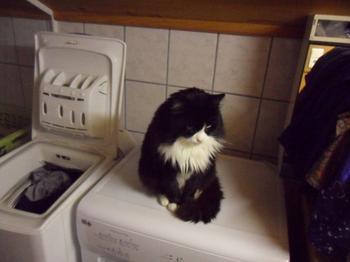 mon chat soskette