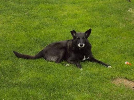 Mon chien Boby