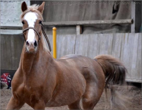 Il n'y a pas de secrets aussi intimes que ceux d'un cavalier et de son cheval ♥