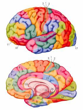 Lapsus ou réalité? Brain remix ;)