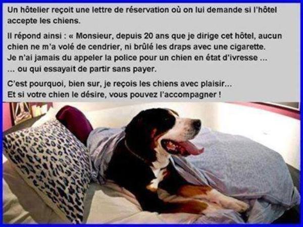 L'animal est doté d'un respect inestimable...