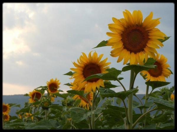 Tournicotiii...... Tournico...sol ^^ j'Adore!!