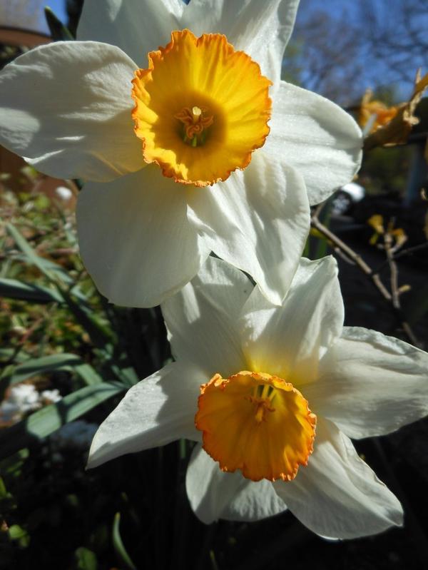 Oui oui c'est le printemps!!