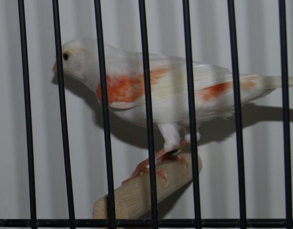 Oiseaux en préparation