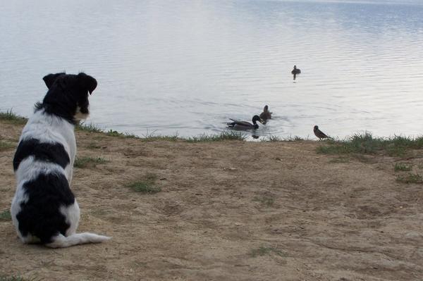 ...mon chien de pêche...